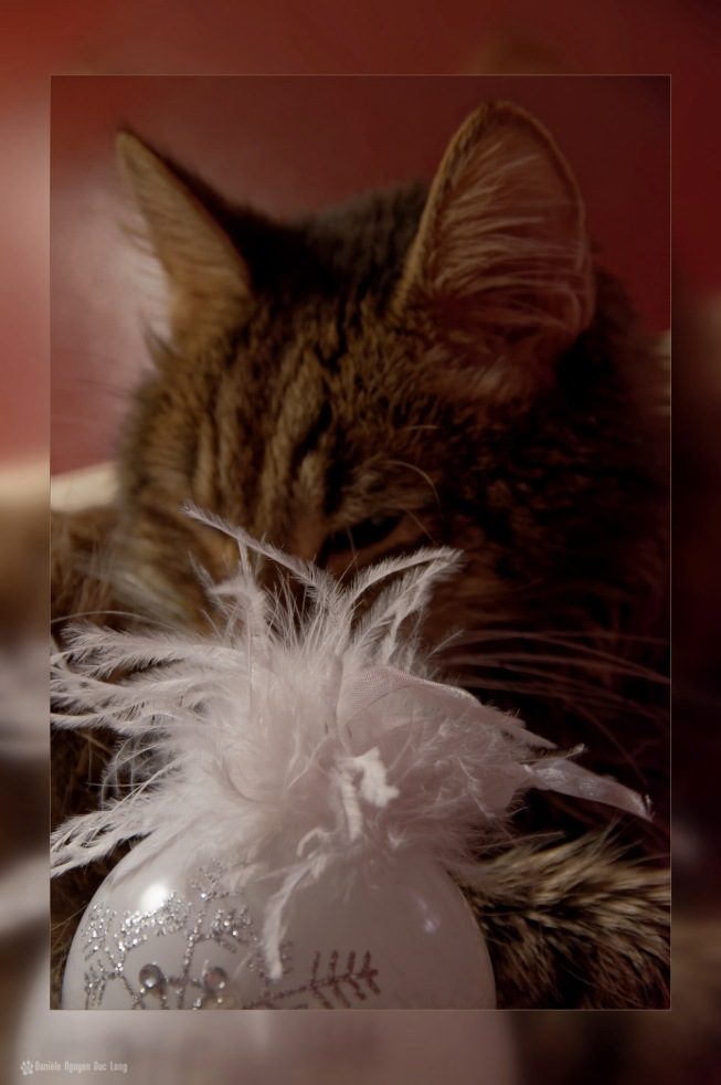anaximandre, chat angora turc, chat, boule de noël, noël 2015 la Tribu d'Anaximandre