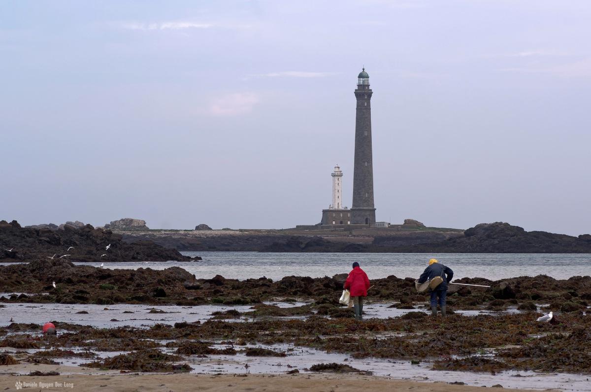 la pêche à pieds au pied du phare de l'ile Vierge couple de pêcheurs à pied au phare de l'ile Vierge, pêche à pied, phare de l'ile Vierge, Lilia, Plouguernaud, Bretagne, Finistère