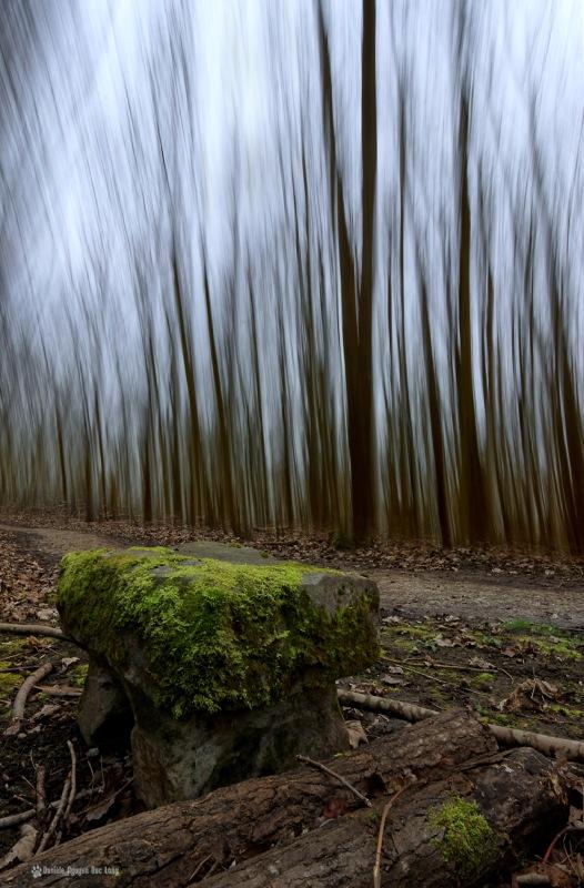 flou directionnel à la prise de vue banc marais fontenay le vicomte