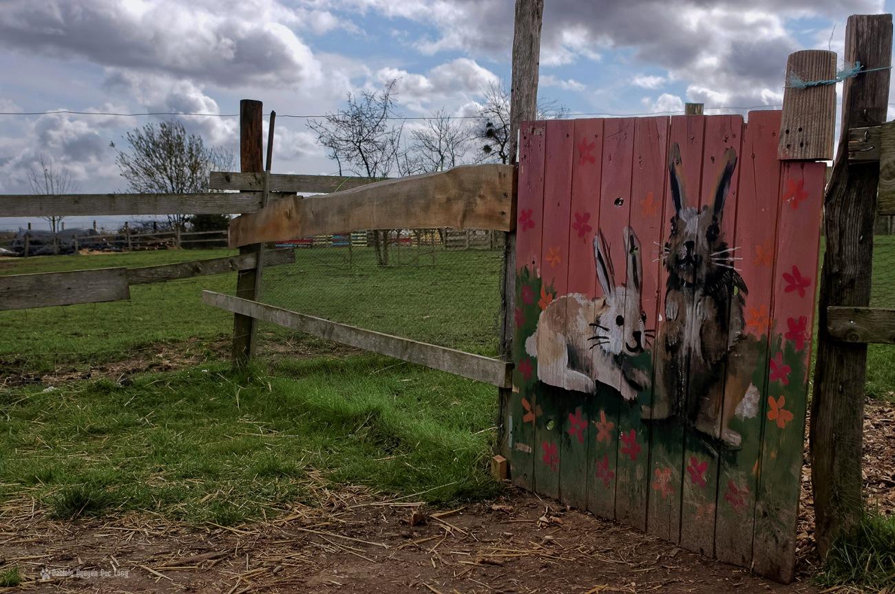 enclos lapins ferme du p'tit brinde paille