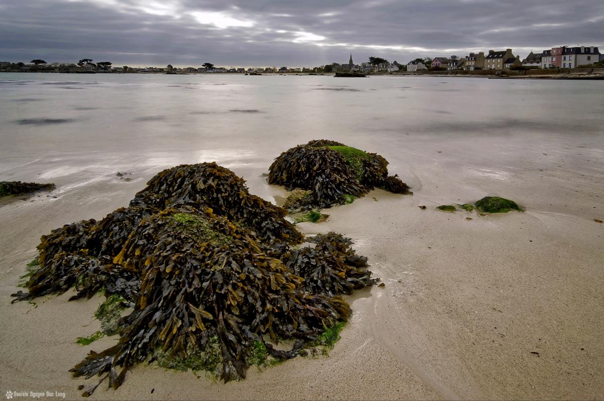 pose longue matin d'hiver marée descendante Brignogan, varech, algues marines, Brignogan, Finistère, Bretagne