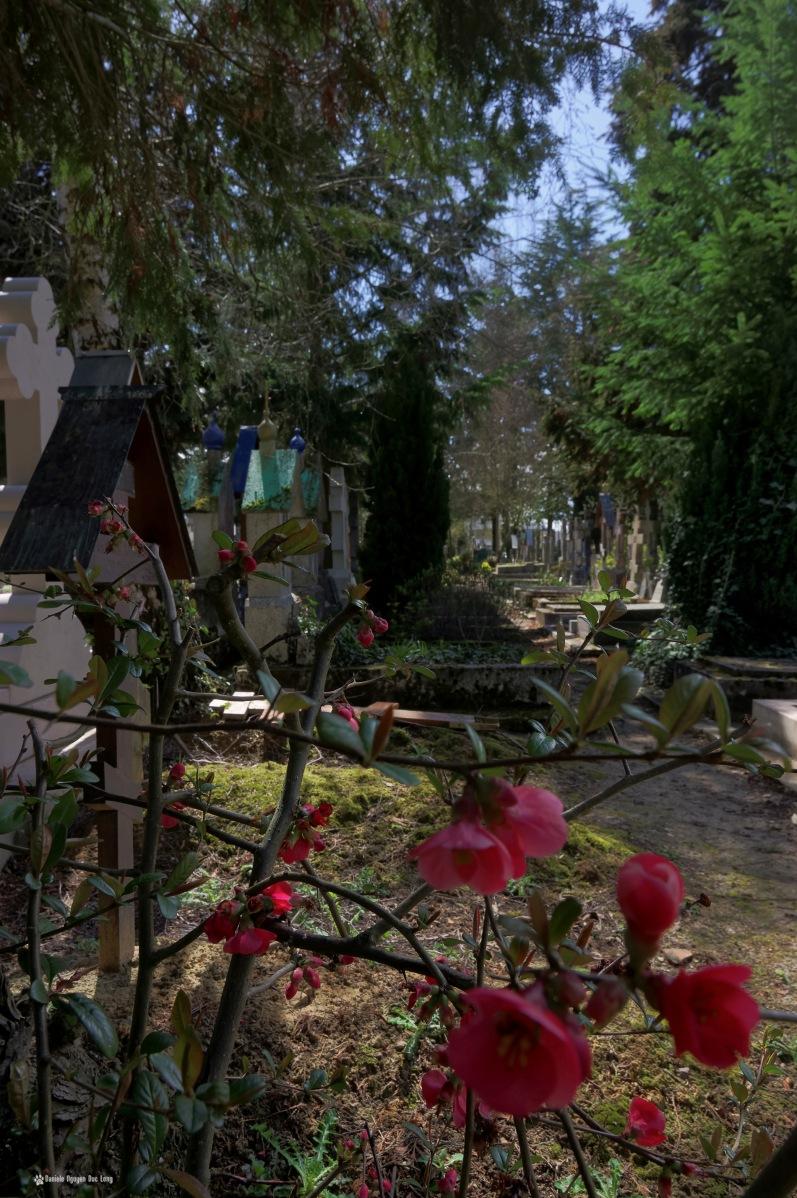 cimetière russe Ste-Geneviève-des-Bois fleurs allée cimetière