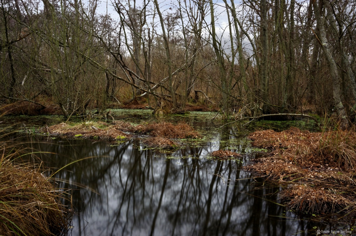 dans les marais de Fontenay le Vicomte, marais, Fontenay le Vicomte, Essonne,