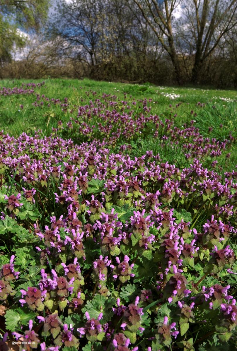 fleurs mauves 01