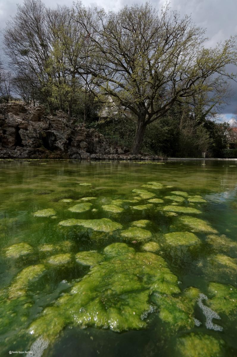 grottes de juvisy mousse du bassin 02