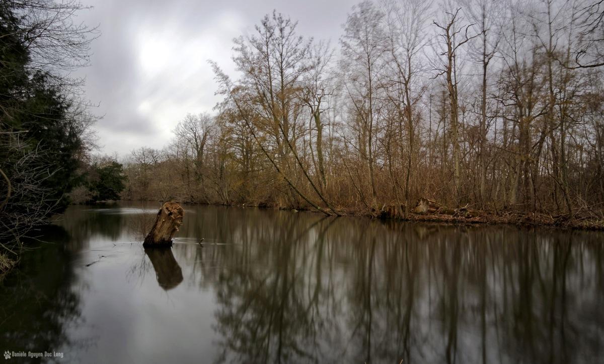 pose longue sur tronc au marais de Fontenay le Vicomte rivière l'Essonne