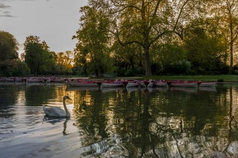 barques cygne lac Daumesnil lever soleil Paris copie
