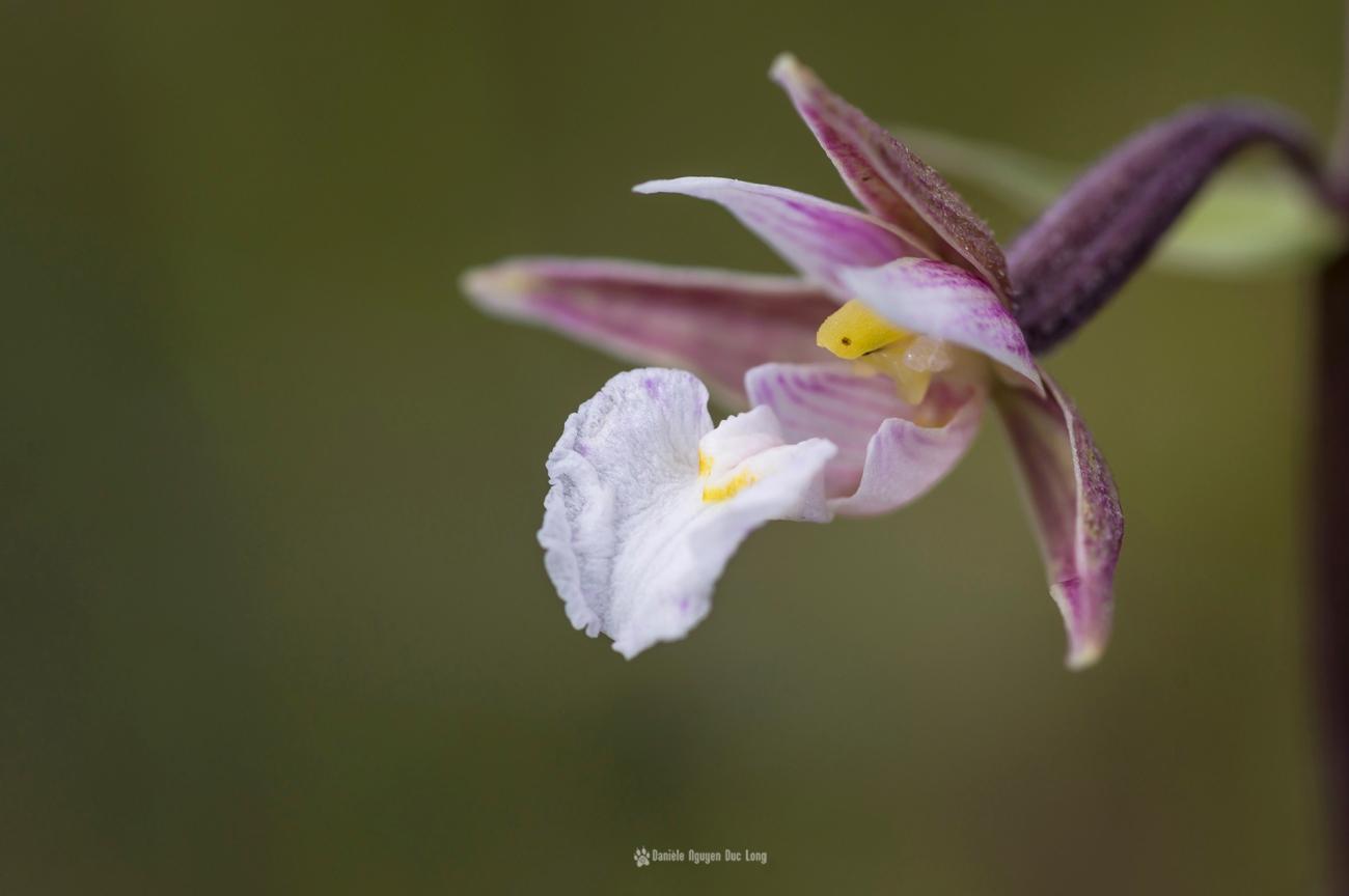 curnic-orchidee-02-copie