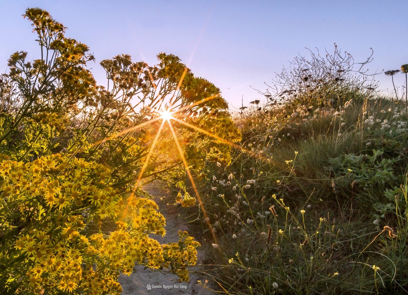 curnic-soleil-etoile-fleurs-jaunes-copie