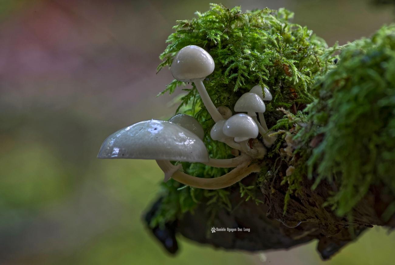 cascade-st-herbot-grappe-de-champignons-blancs-mousse au 55_300-, champignons, mousse,