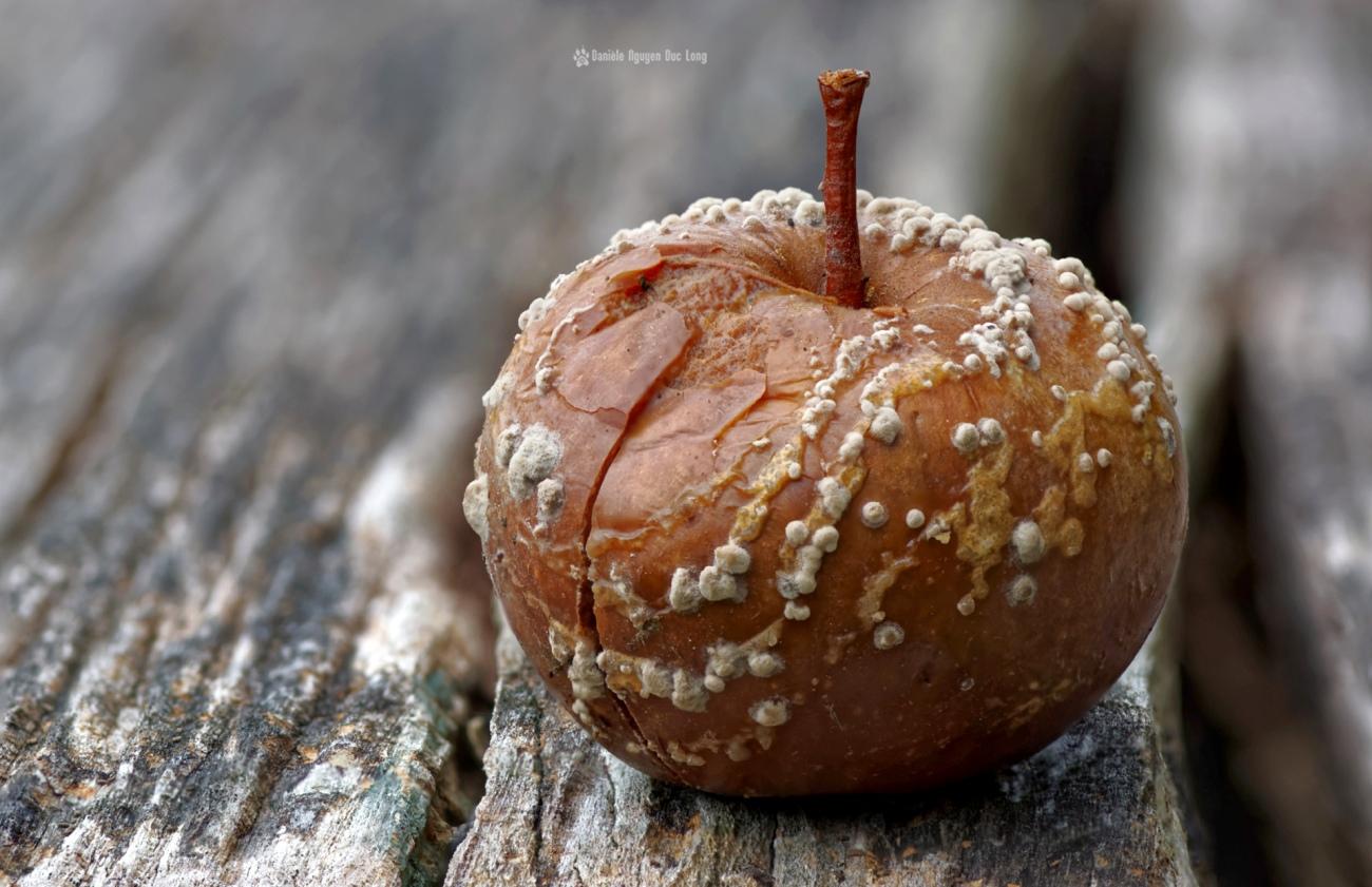 fs-pomme-marais