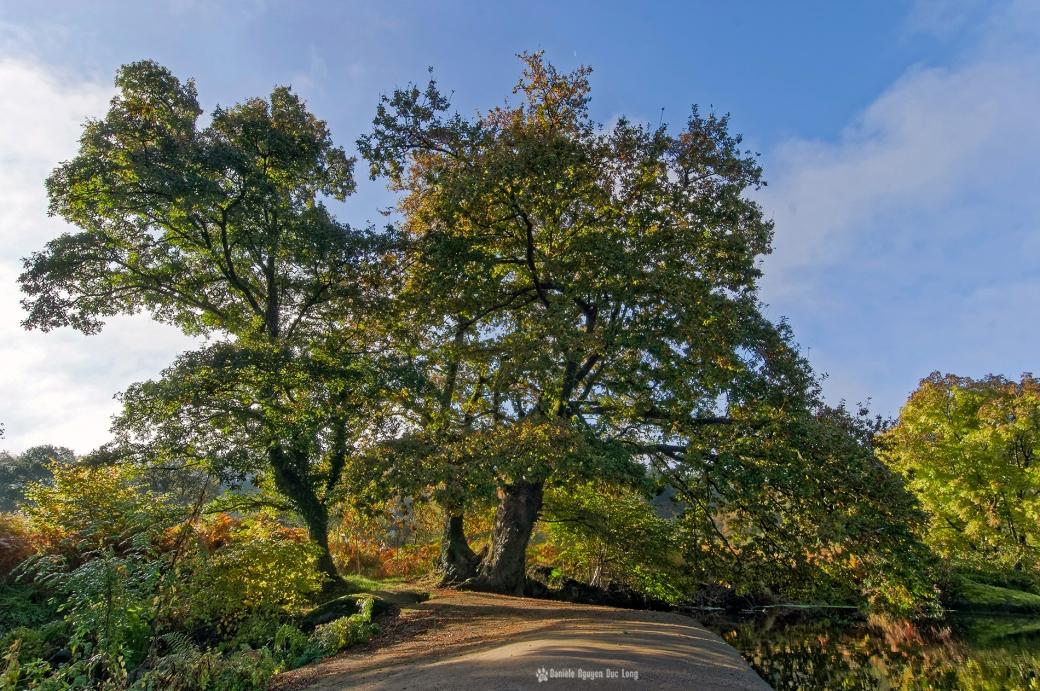 arbres-majestueux-aux-roches-du-diable, reflets-couleurs-d'automne-roches-du-diable-, Guilligomarch'h, Finistère, Bretagne, L'Ellé,