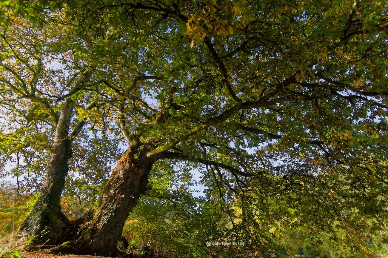 dessous-les-arbres-majestueux-aux-roches-du-diable-, arbres-majestueux-aux-roches-du-diable, Guilligomarch'h, Finistère, Bretagne, L'Ellé,