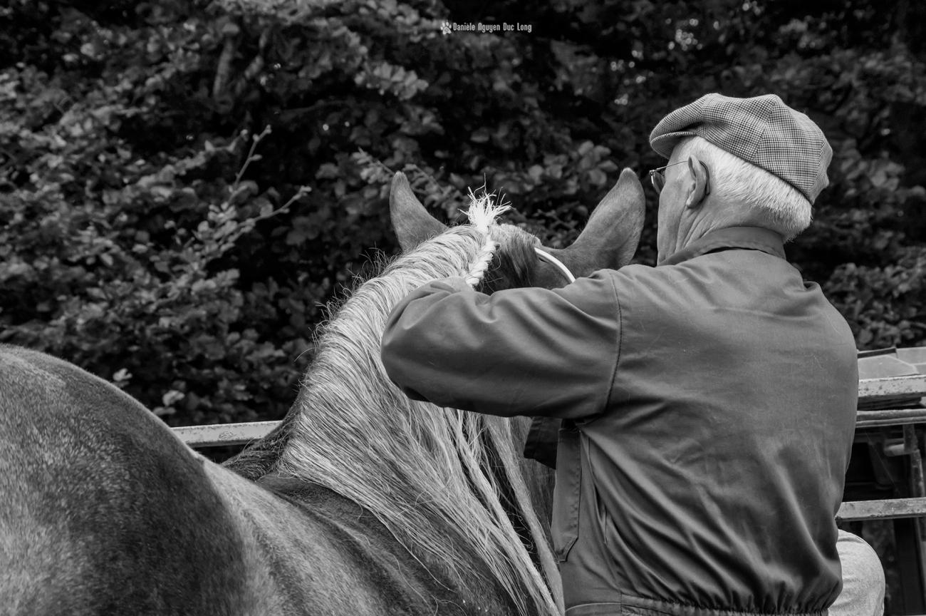 concours-chevaux-bretons-nattage-papy2-copie-copie