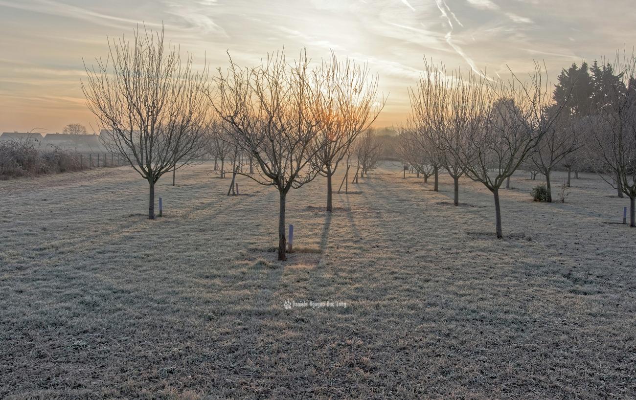 ambiance-polaire-au-verger-01-copie