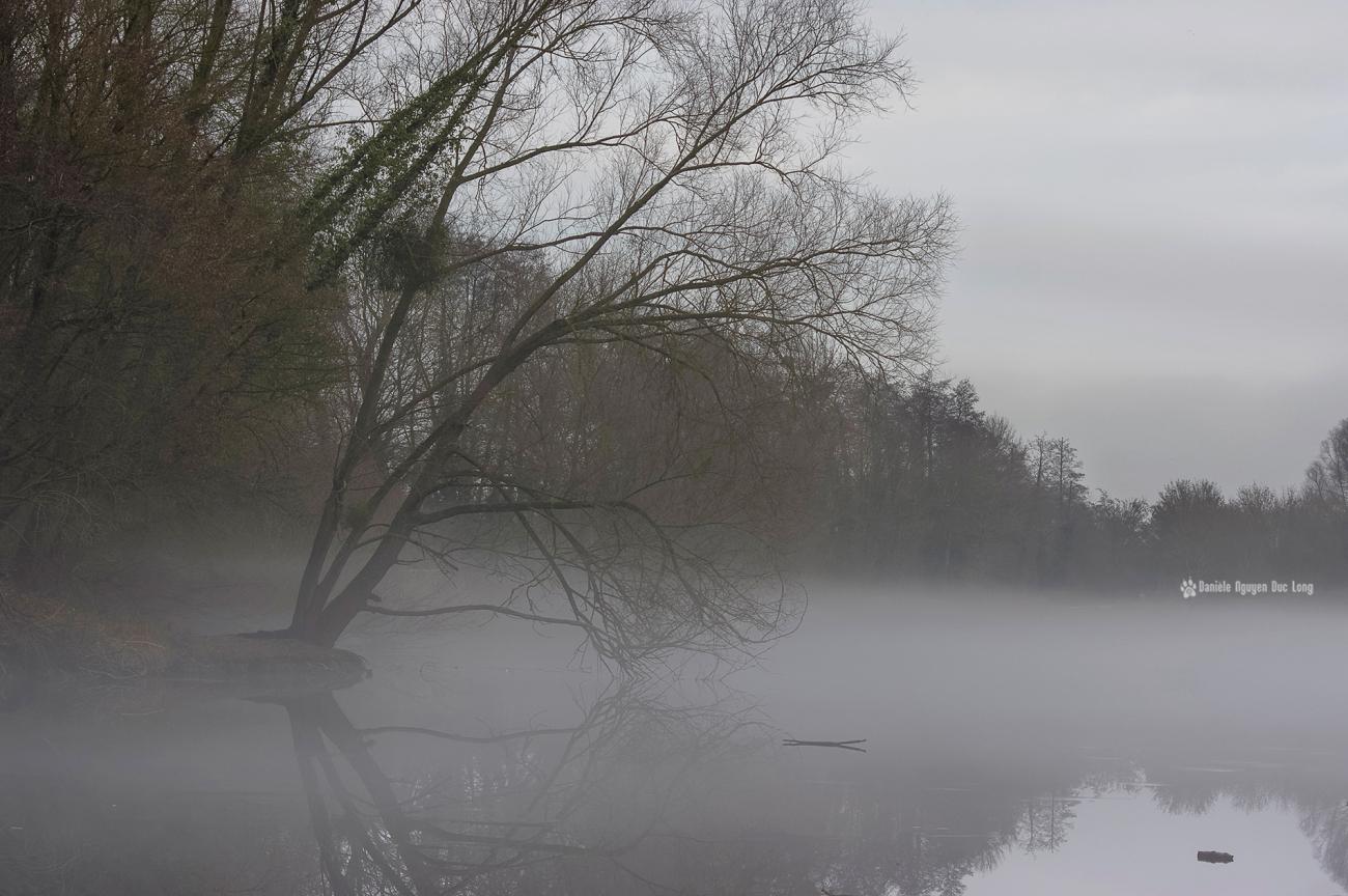 brume-sur-le-lac-03-copie