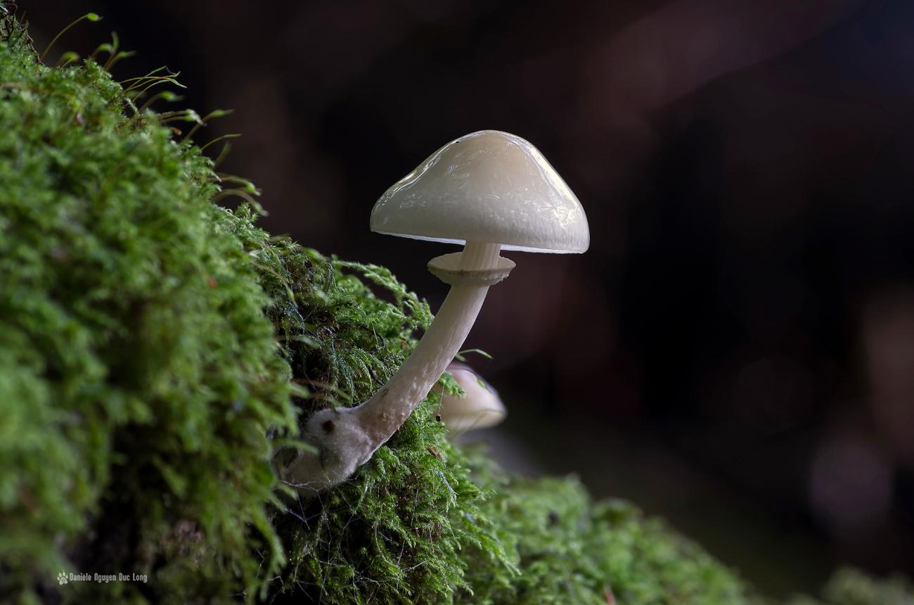 cascade-st-herbot-champignon-blanc-mousse1