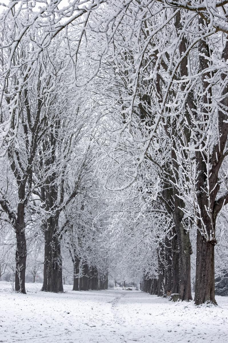 neige-du-nouvel-an-allee-maronniers-01-copie