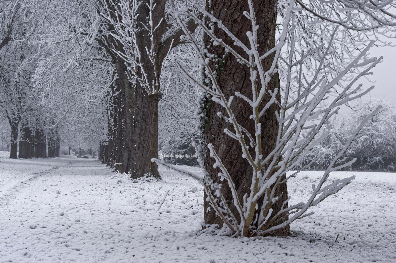 neige-du-nouvel-an-allee-maronniers-02-copie