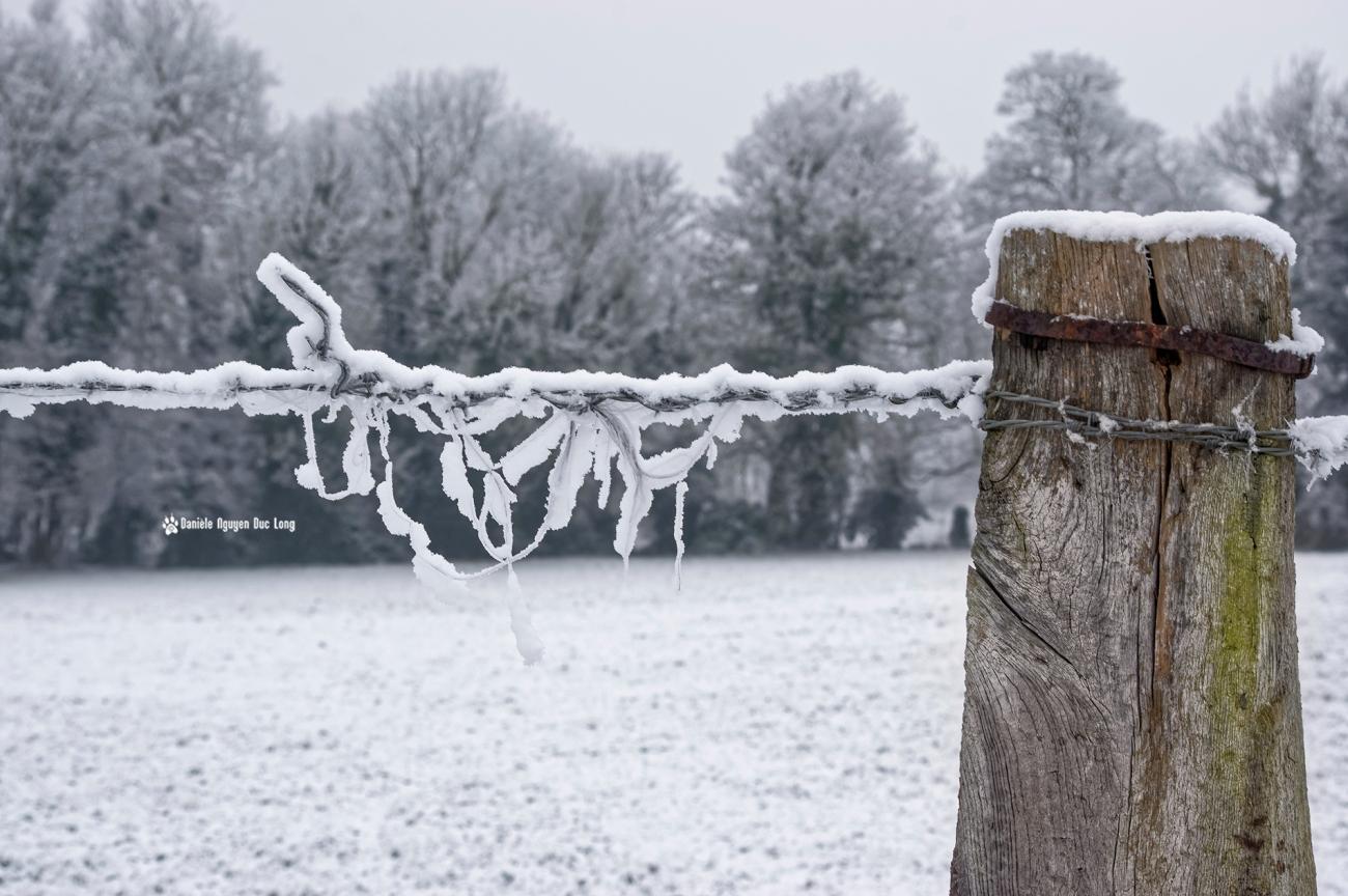 neige-du-nouvel-an-detail-cloture-02-copie