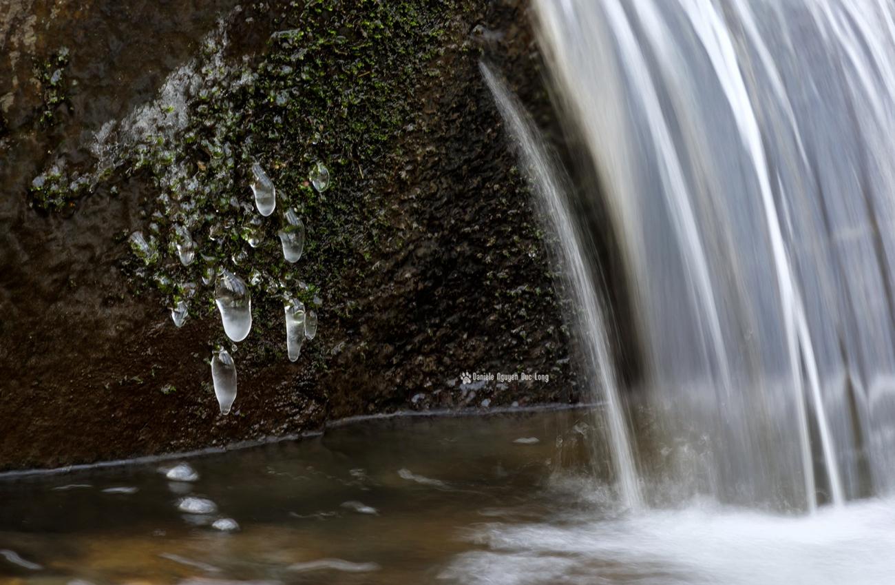 quand-il-gele-sur-le-rouillon-, glaçon, givre, hiver, froid, bois des templiers, Longjumeau, Essonne