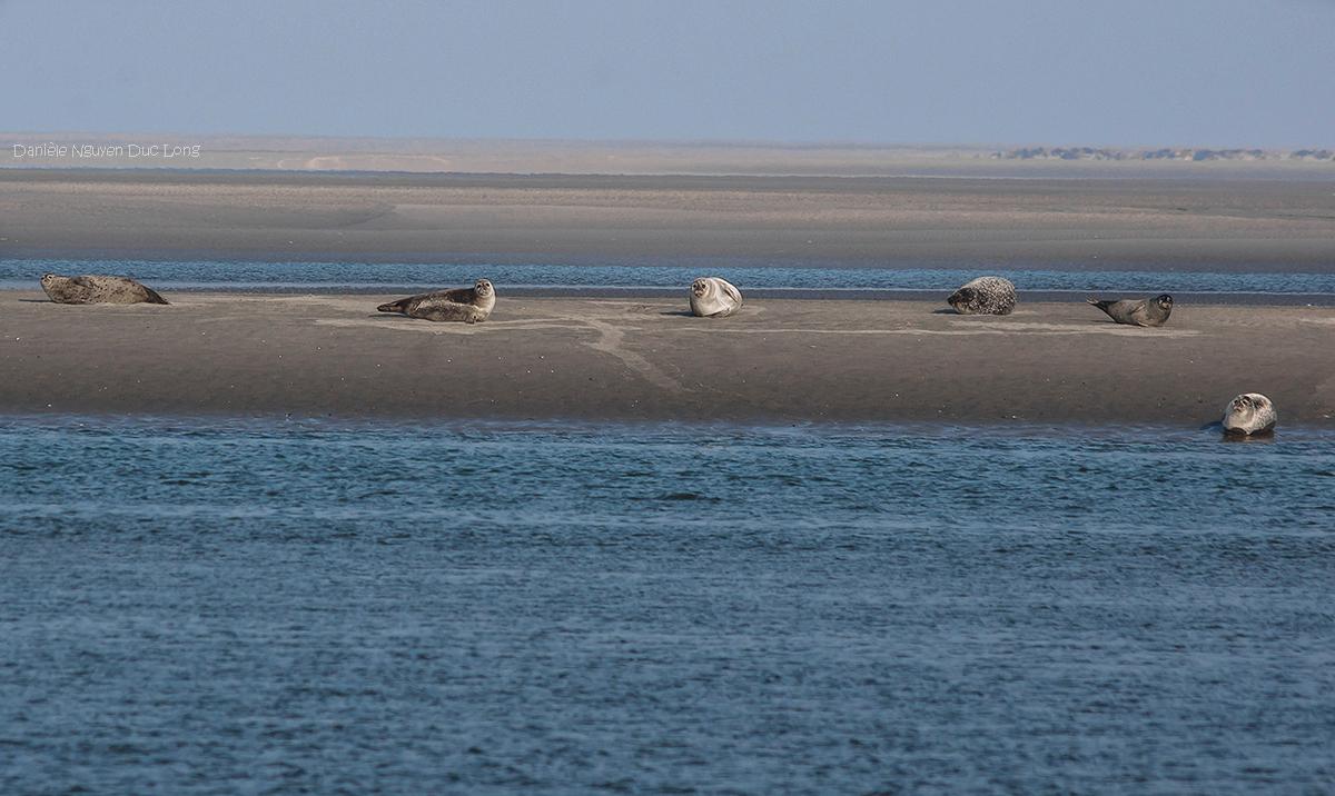 pointe du Hourdel, baie de Somme, Picardie, Hauts-de-France, phoques,