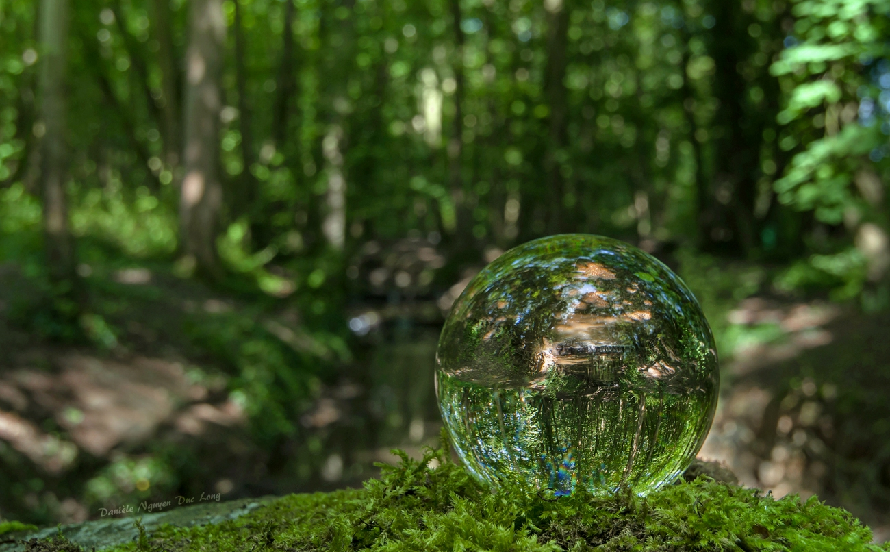 photo à travers une boule de cristal