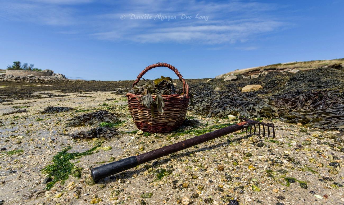 panier à crustacés, pêche à pied grandes marées en Finistère, île Wrac'h