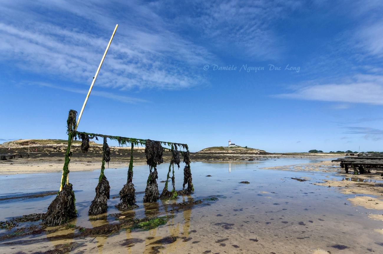 parc à huîtres de chez Legris, Lilia, phare de l'île Wrac'h